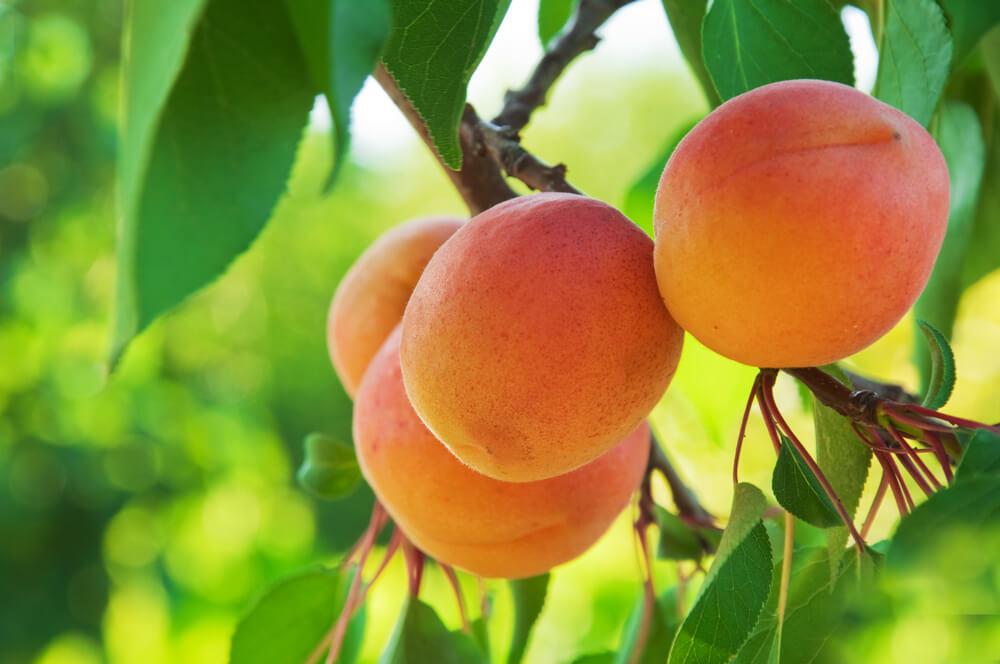 Laaghangend fruit plukken (5 do's en een don't)